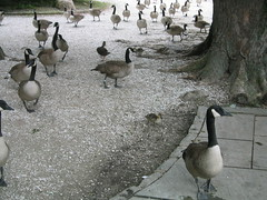 Bird stampede