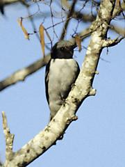 animal, branch, wing, fauna, close-up, beak, twig, bird, wildlife,