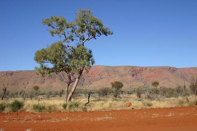 Driving in Australia - Flickr CC obliot