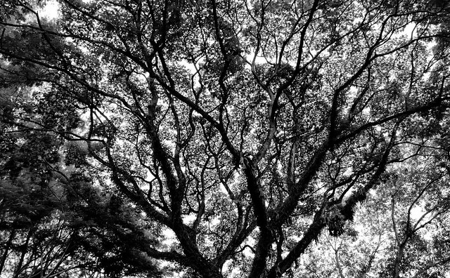 thailandtrees-25