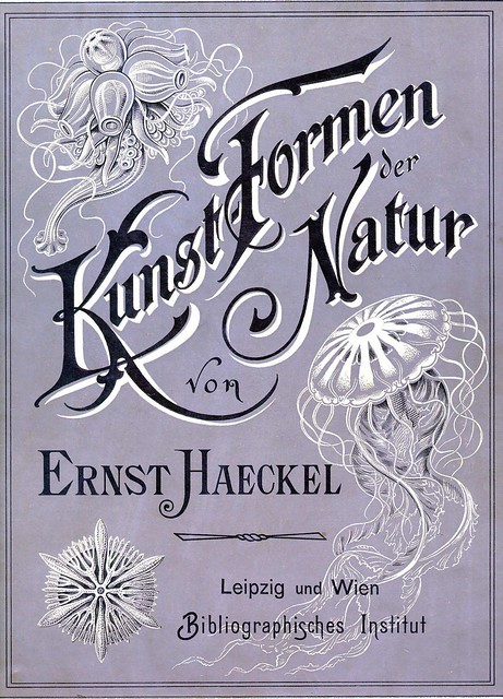 Haeckel_Kunstformen_001 by EricGjerde, on Flickr