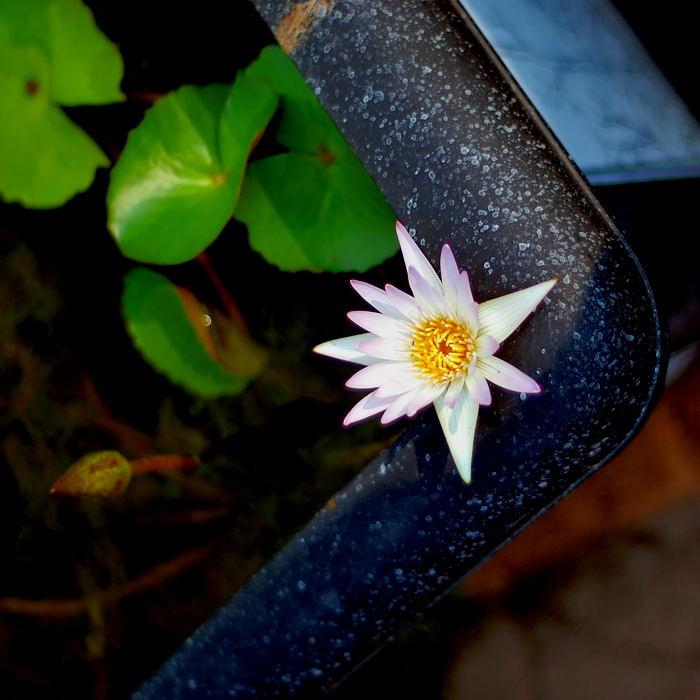 Estrella, ?? (Taipei), ?? (Taiwan), July 2007