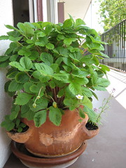 The whole pot