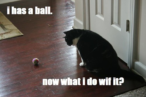 lolcat molly ball