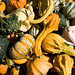 Small photo of Shapely Gourds