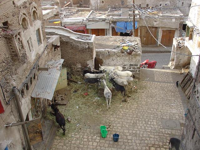 Souk al Erg in Sanaa (Yemen), Donkey market