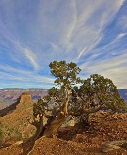 Juniper & The Canyon