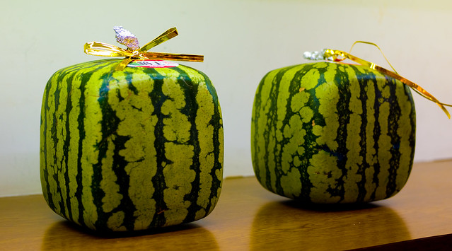 Square watermelons flickr photo sharing - Square watermelons how and why ...
