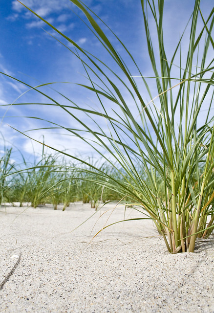 Beach Grass At The Quot Old Quot Break Chatham Cape Cod Flickr
