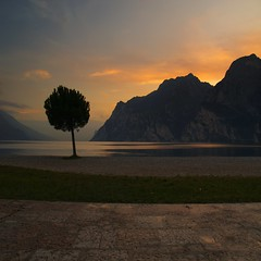 Inclined tree on Garda sunset...