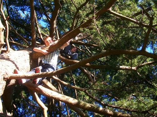 tree-climbing, Greenwich Park