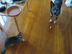 Pico and Buckminster