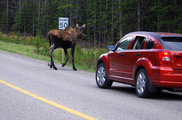 Moose Member Car Rental Discounts