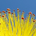 Flower and Sky II by T.D. Ford (Grundlepuck)