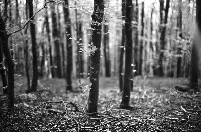 Lindinny Woods, Autumn 2007