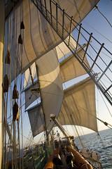 Under sail at dawn