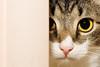 Katt som gömmer sig by Johan Abelson
