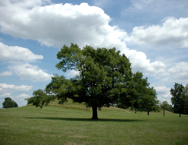 burr oak hindu dating site What is dendrochronology dendrochronology is the dating and study of annual rings in trees the word comes from these roots: ology = the study of.