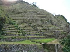 plateau, terrace, plantation,