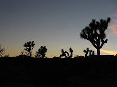 Twilight in Joshua Tree National Park, California