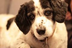 snoop dog (spot)