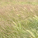Small photo of Grass