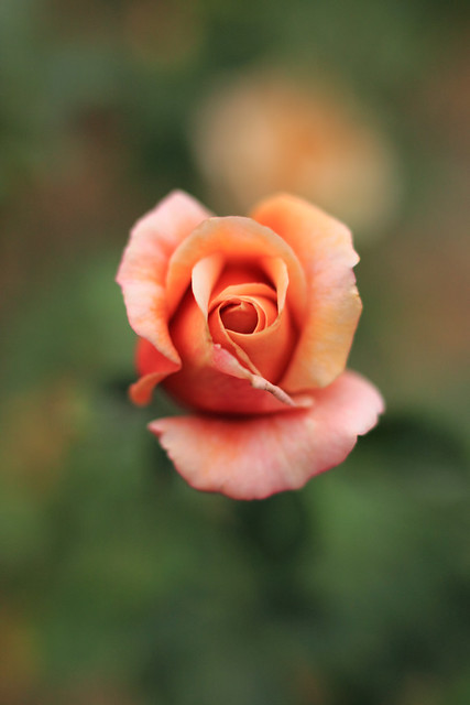 Photo:Rose, Julia By nekonomania