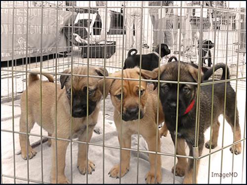Puppy Adoption -Flickr
