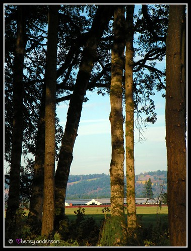 trees rural forest landscape farm picnik