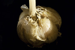 vegetable, macro photography, food, close-up, still life photography, onion genus, still life,