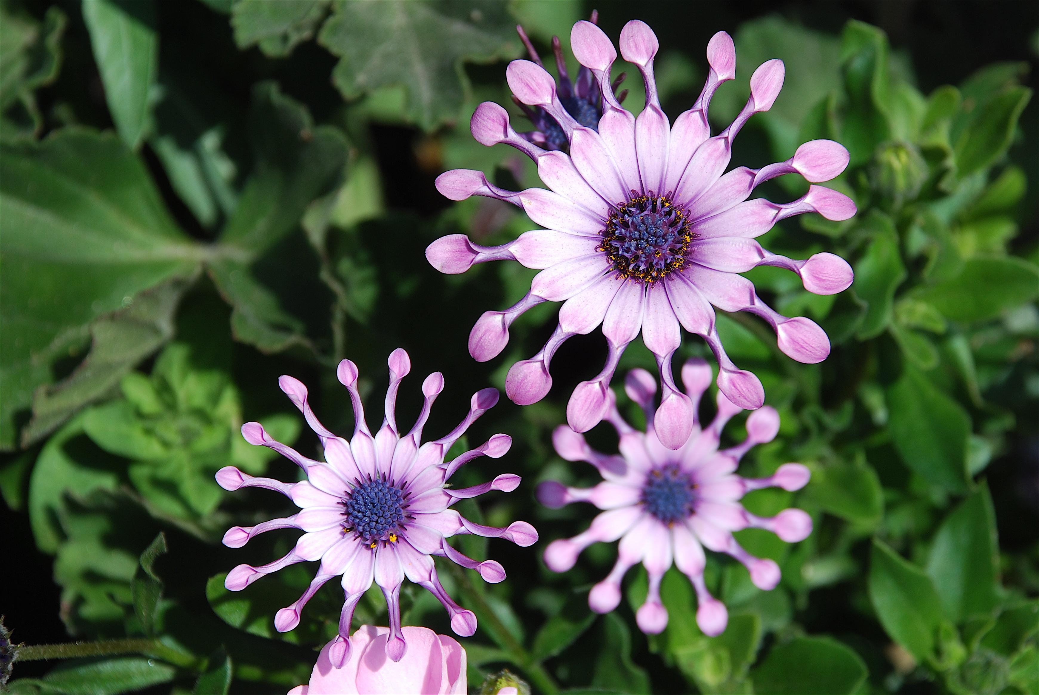 style amazing flowers