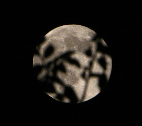 dark shadows on a harvest moon