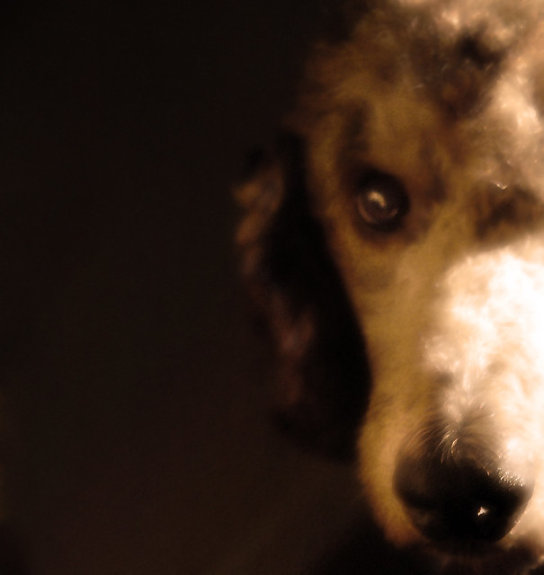 Royal Canin Canned Dog Food Adultdog