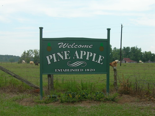 Pine Apple Alabama