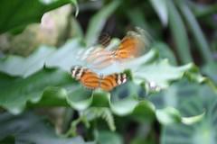 Butterfly Rainforest 059