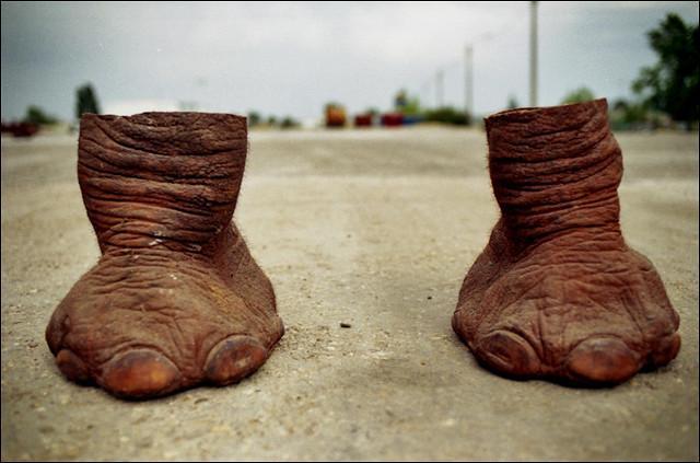 elephant feet...