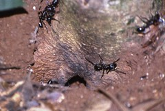 spider(0.0), arthropod(1.0), arachnid(1.0), animal(1.0), ant(1.0), invertebrate(1.0), insect(1.0), macro photography(1.0), fauna(1.0), close-up(1.0), pest(1.0), wildlife(1.0),