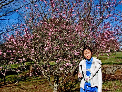 Peach Tree 002