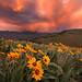 Spring Storm, Sunset by KPieper