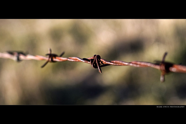 Barbed Wire and Fence Posts Tamed the Wild West!