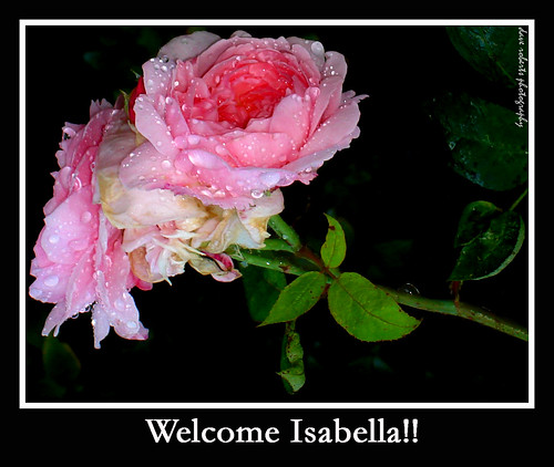 Welcome bella Isabella...