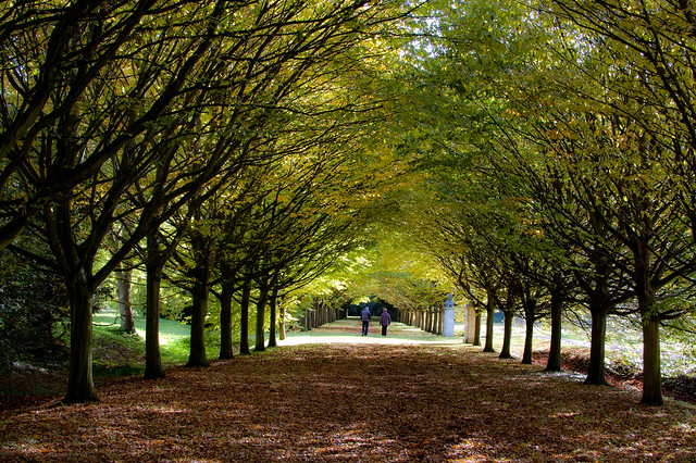 It's Autumn at Anglesey Abbey