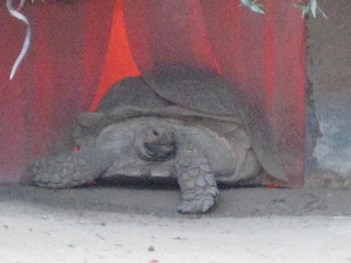 Tortoise of doom