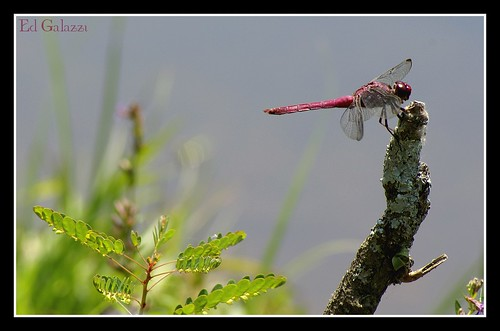 Dragon Fly..........JB