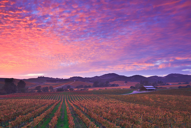 Napa Dressed in Pink