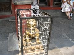 cage, iron,