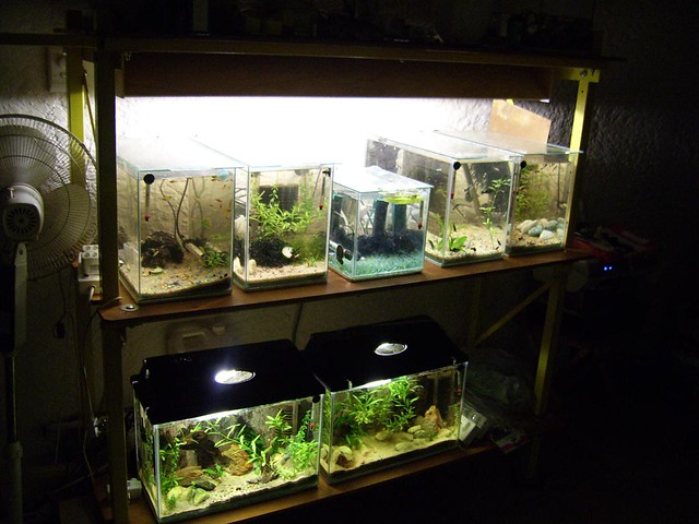 1464544324 621afbe9ab for Diy fish tank