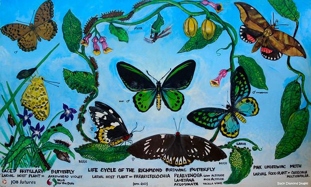 Richmond Birdwing Butterly Mural - Butterfly Habitat - Chillingham Community Centre