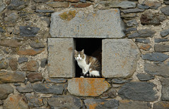 Cat in Nouvialou