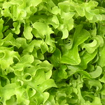 Foto: Pluksla 'Green Salad Bowl'